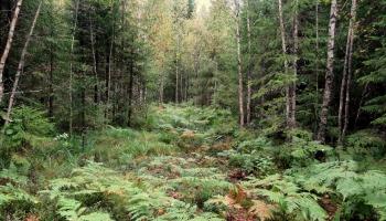 Meža svētība
