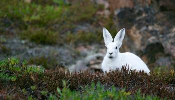 Зима, которой не было: как это повлияло на жизнь животных
