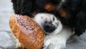 Pirmā palīdzība mājdzīvniekam un rūpes par mājas mīluli vasarā