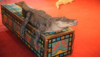 Imants Ziedonis: Kroko un Dils