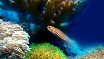 Морской аквариум: от слов - к делу