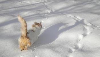Rūpes par mājas mīluļiem ziemā un Covid-19 izplatības laikā
