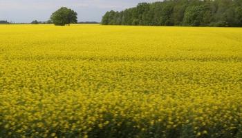 Mārtiņš Cimermanis par aptauju lauksaimniekiem par ES lauku politiku
