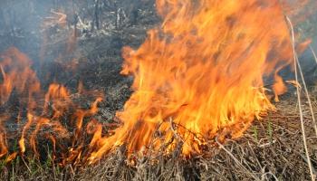 Turpinās plašā ugunsgrēka dzēšana Ādažu poligonā
