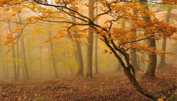 Mežā ienāk rudens