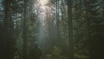 Skaņu meža dziesmas