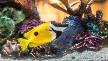 Морской аквариум. Советы для начинающих