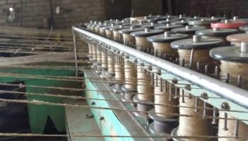 Linkopība Latvijā praktiski iznīkusi, šobrīd turas vien linu pārstrādes nozare