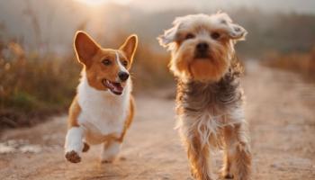 Впредь чипированием и регистрацией собак в единой базе данных будет заниматься ветеринар