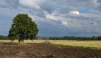 Latvijas dižākais koks - ozols
